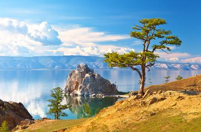Sibirische Lärche am Baikalsee