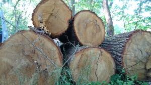 Eichenholz Stamm